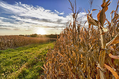 Photograph - Cornfield At Sunset by Chris Reed