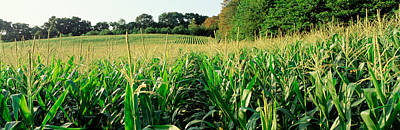 Cornfield, Baltimore County, Maryland Print by Panoramic Images