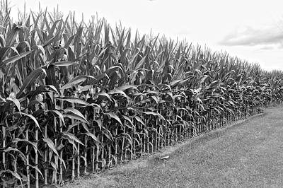Cornfield Black And White Art Print