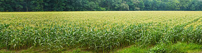 Cornfield, Cuyahoga Valley National Art Print