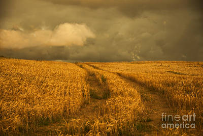 Photograph - Cornfield by Gry Thunes
