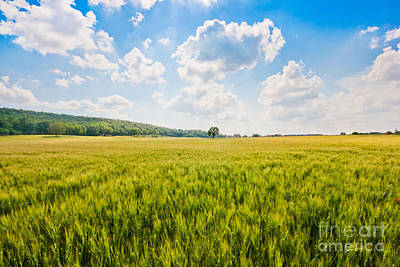 Cornfield In Tuscany Art Print by JR Photography