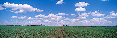 Cornfield, Marion County, Illinois, Usa Art Print by Panoramic Images