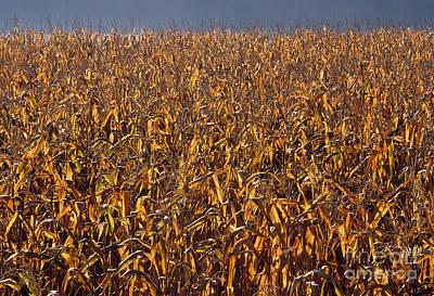 Illinois Farm Land Photograph - Cornfield by Ron Sanford