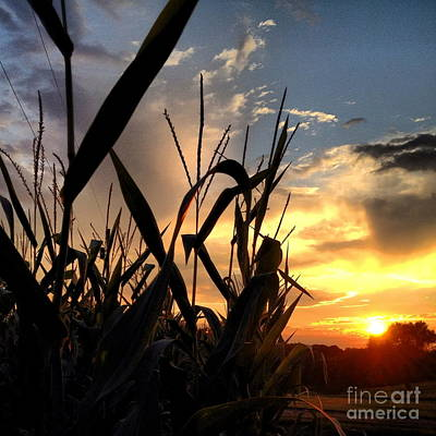 Photograph - Cornfield Sundown by Angela Rath