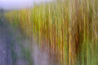 Cornfields. Memories Of Van Gogh.... Art Print