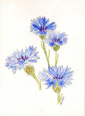 Painting - Cornflowers by Stephanie Grant