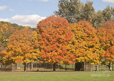 Photograph - Corning Fall Foliage 1 by Tom Doud