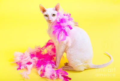 Cornish Rex Art Print by Verena Matthew