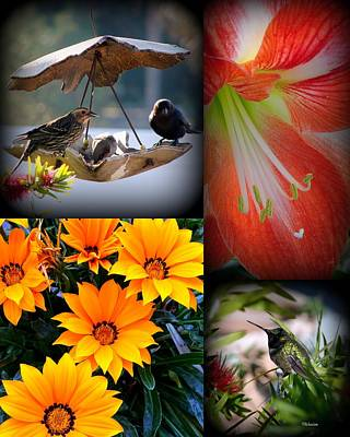 Photograph - Cornucopia Garden by Priscilla Richardson