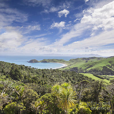 Coromandel Port Jackson New Zealand Art Print