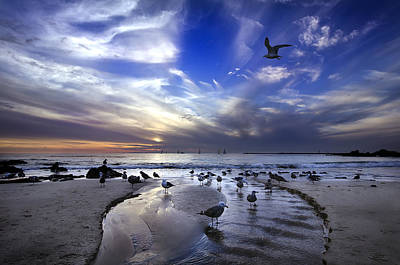 Seagull Photograph - Corona Del Mar by Sean Foster