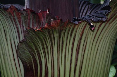 Art Print featuring the photograph Corpse Flower Detail 1 by Sheila Byers