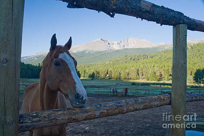 Photograph - Corral At The Wind River Ranch by Fred Stearns