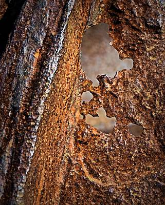 Photograph - Corrosion by Nadalyn Larsen