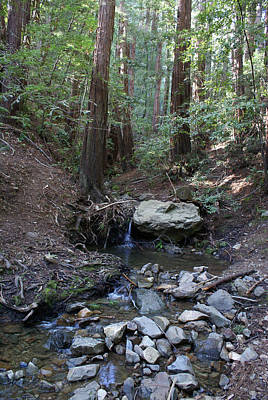 Photograph - Corte Madera Creek On Mt. Tam In 2008 by Ben Upham III
