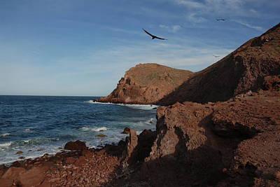 Sea Of Cortez Painting - Cortez Coast Line by Ian Henderson