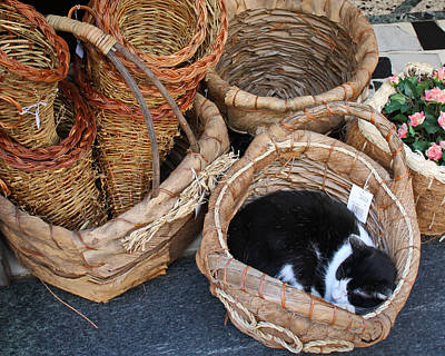 Photograph - Cortona Catnap by Michael Yeager