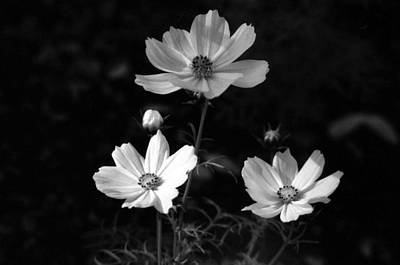 Photograph - Cosmo - Infrared 03 by Pamela Critchlow