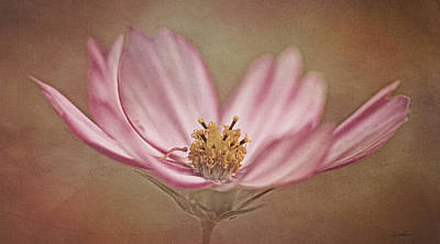 Photograph - Cosmos by Ann Lauwers