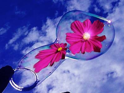 Photograph - Cosmos Bubble by Nancy Pauling