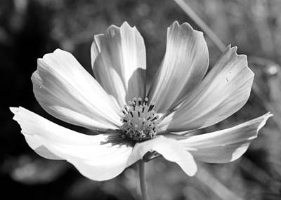 Art Print featuring the photograph Cosmos Bw1 by Gerry Bates