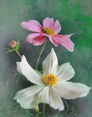 Photograph - Cosmos by David and Carol Kelly