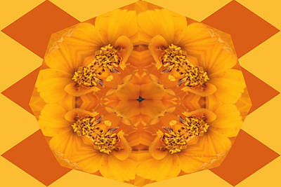 Photograph - Cosmos Kaleidoscope by Kristy Jeppson