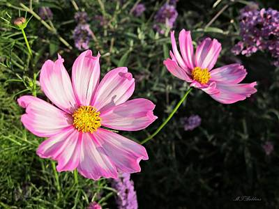 Photograph - Cosmos Pair by MTBobbins Photography