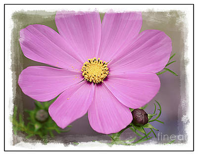 Photograph - Cosmos by Richard J Thompson