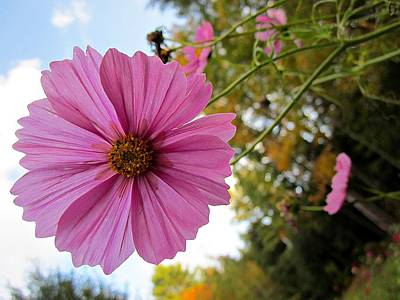 Photograph - Cosmos To The Sky by MTBobbins Photography