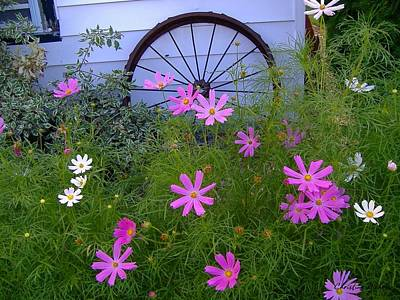 Photograph - Cosmos Wagon Wheel by Christine Nichols