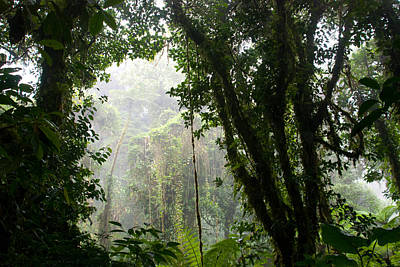 Blue Hues - Costa Rica Cloud Forest by Cascade Colors