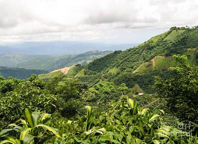 Coffee Plant Photograph - Costa Rican Coffee by Michelle Wiarda