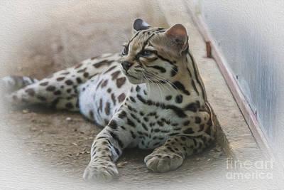 Golden Leopard Digital Art - Costa Rican Margay Cat  by Patricia Hofmeester