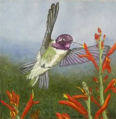 Painting - Costa's Hummingbird by Fran Brooks