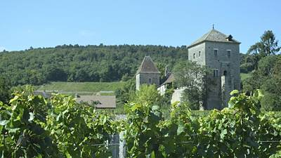 Photograph - Cote De Nuits Vineyard 1.1 by Cheryl Miller