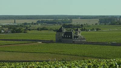 Photograph - Cote De Nuits Vineyard 1.9 by Cheryl Miller