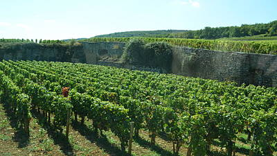 Photograph - Cote De Nuits Vineyard 1.8 by Cheryl Miller