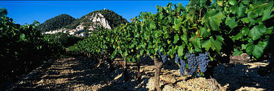 Grapevines Photograph - Cote Du Rhone Vineyard, Provence, France by Panoramic Images