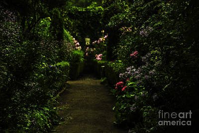 Sun Photograph - Cottage Garden In Sun And Rain by Gry Thunes