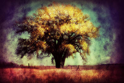 Country Cottage Photograph - Cottonwood 3 by Julie Hamilton