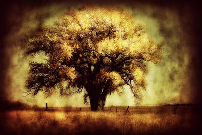 Country Cottage Photograph - Cottonwood 4 by Julie Hamilton