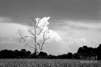 Cotton Candy Tree - Clarksdale Mississippi Art Print