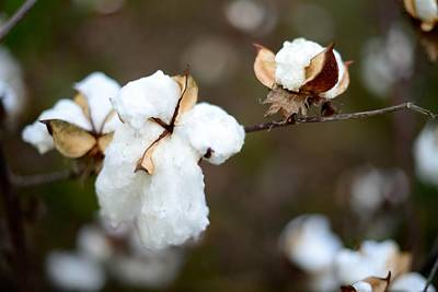 Art Print featuring the photograph Cotton Creations by Linda Mishler