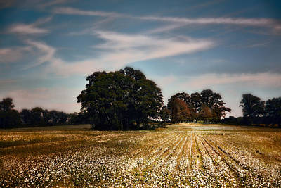 Cotton Field Cemetery Print by Jai Johnson