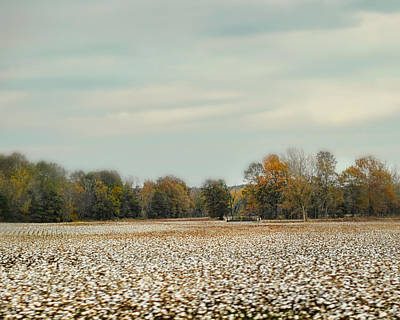 Cotton Field In Autumn - Rural Fall Scene Print by Jai Johnson