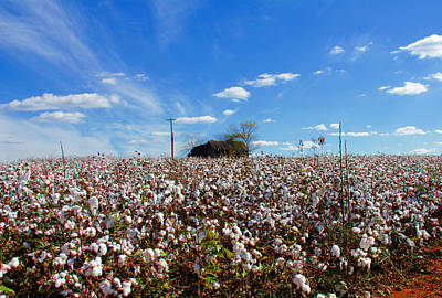 Art Print featuring the photograph Cotton Field Under Cotton Clouds by Andy Lawless