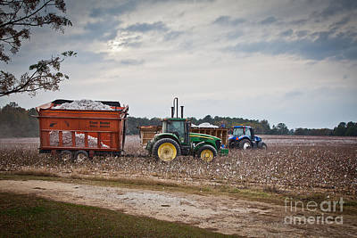 Cotton Harvest With Machinery In Cotton Field Art Print