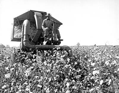 Pineland Farms Photograph - Cotton Picker In Action by Underwood Archives
